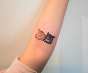 cat, tattoo, and arm image