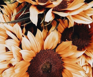 beautiful, flowers, and flower image