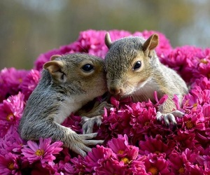 animals and squirrels image