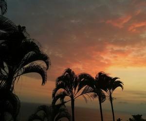 sunset and palms image