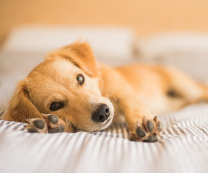 animal, cozy, and dog image