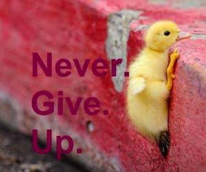 duck, persistence, and duckling image