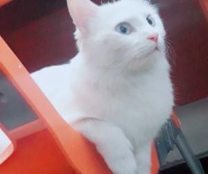 albino, animals, and blue eyes image