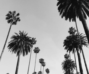 b&w, palmtrees, and photography image