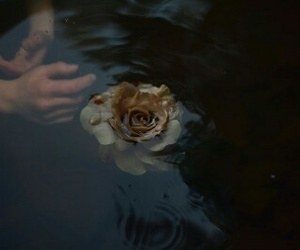 flowers, water, and dark image