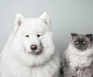 cat, dog, and animal image