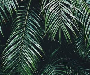 green, plants, and palms image