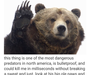 adorable, animals, and bears image
