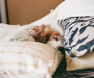 dog, vintage, and animal image