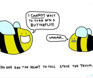 bee, funny, and butterfly image