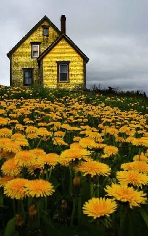 flowers, yellow, and house image