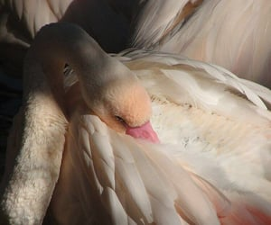 photography, Swan, and art image