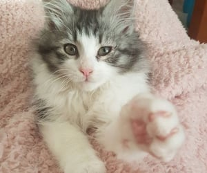 cats, kittens, and paws image