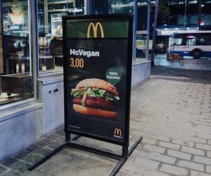 animals, fast food, and food image