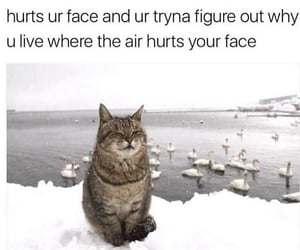 funny, cat, and cold image