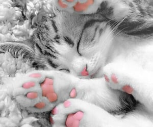 kitten, pink, and paws image