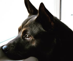 black, white, and dog image