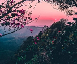 nature, flowers, and sunset image