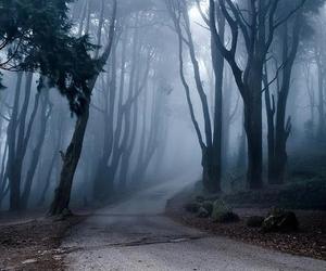Àrboles and bosque image