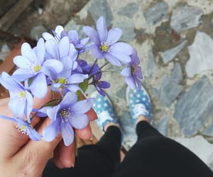 flower, photobyme, and flowers image