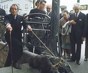 dali, salvador dali, and anteater image