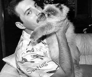 cat, Freddie Mercury, and Queen image
