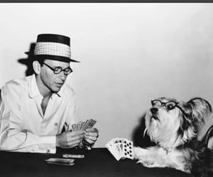 dog, frank sinatra, and cards image