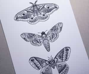 art, drawing, and moth image