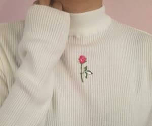 pink, rose, and white image