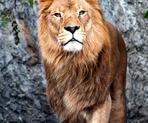 aesthetic, Leo, and animal image