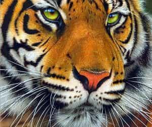 tatuaje and tigres image