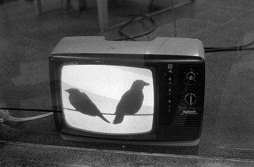 bird, black and white, and tv image