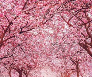 landscape, pink, and flowers image