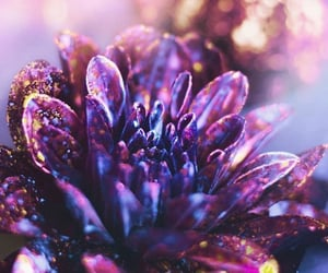 colors and flower image