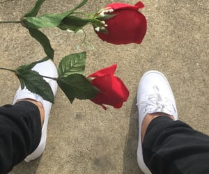 rose, roses, and vans image