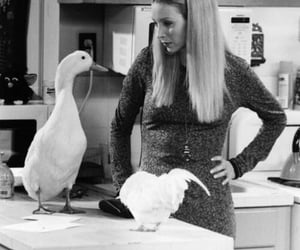 blackwhite, phoebe, and ducks image