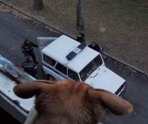 animal, police, and russia image