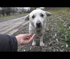 cute dog, video, and ❤ image