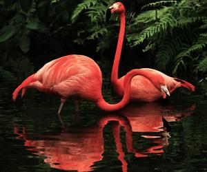 theme, animal, and birds image
