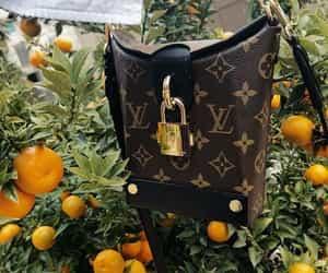 bag, bento box, and citrus image