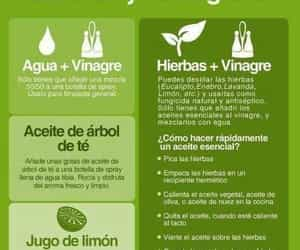bio, eco, and ecológico image