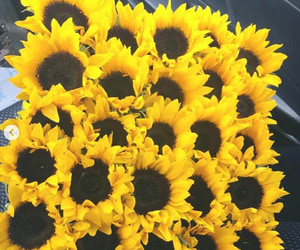 bouquet, girasol, and ramo image