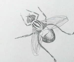 art, drawing, and fly image