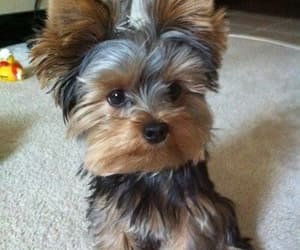 cute puppy, fluffy, and puppy image