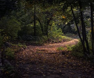 forest, photography, and fun image