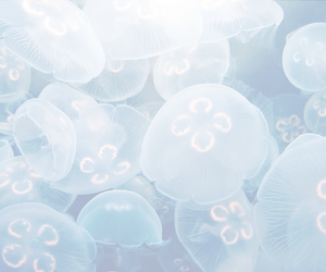 jellyfish, blue, and ocean image
