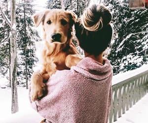 beautiful, dog, and cute image