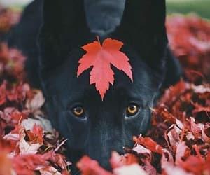 dog, animal, and black image