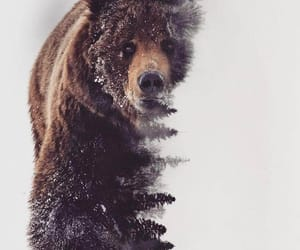 animals, bear, and painting image