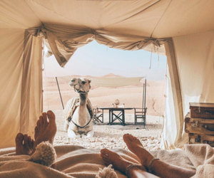 camel, couple, and desert image